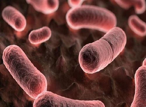 باکتری یرسینیا پستیس Yersinia pestis در طاعون