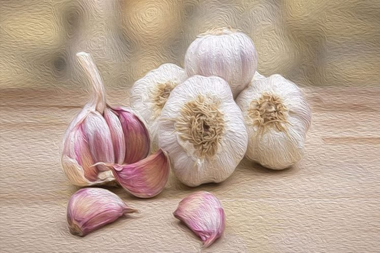 Garlic and Cholesterol; Does Garlic Reduce Cholesterol Levels?