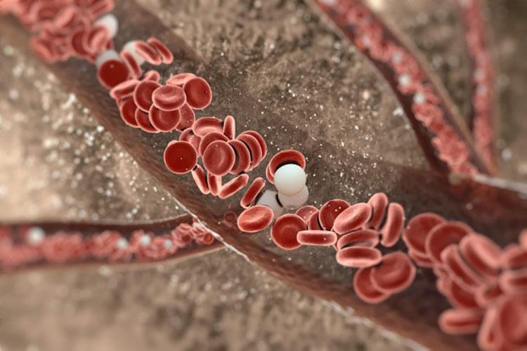 Was ist WBC im Bluttest?
