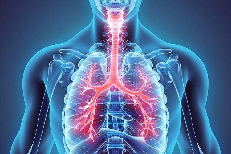 همه چیز درباره ریه و دستگاه تنفسی