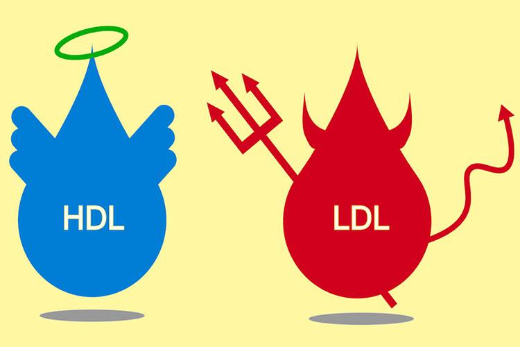 تفاوت بین کلسترول HDL و LDL چیست؟