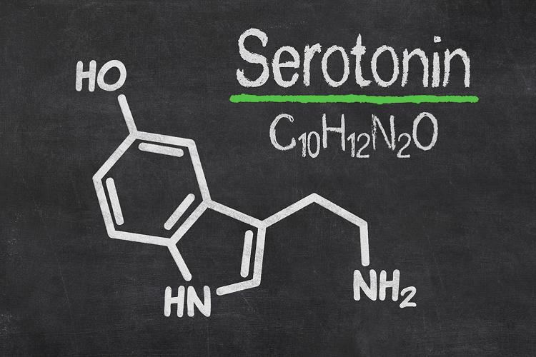 درباره سروتونین serotonin چه میدانید؟