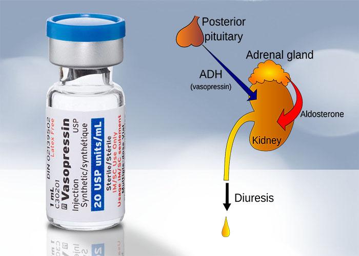 آشنایی با هورمون آنتی دیورتیک (ADH) یا وازوپرسین Vasopressin