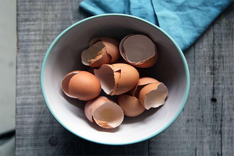چگونه پوسته تخممرغ خردشده میتواند به ترمیم آسیب استخوان کمک کند؟