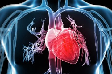 Important and dangerous factors for the heart