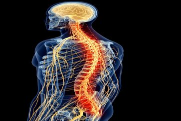 Everything about spinal cord injury from causes and symptoms to cure