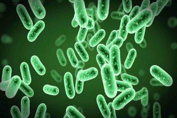 وبا چیست؟ نشانهها و راه درمانش را بشناسیم