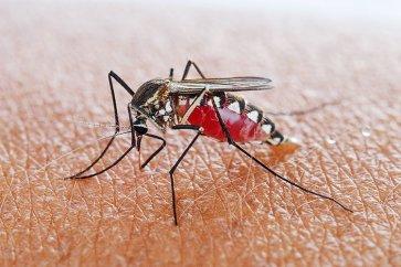 بیماری مالاریا چیست و شیوه انتقال، میزان شیوع و روشهای پیشگیری از آن به چه صورت است