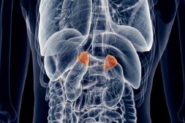 درباره غده آدرنال یا غده فوق کلیوی adrenal glandsچه میدانید؟