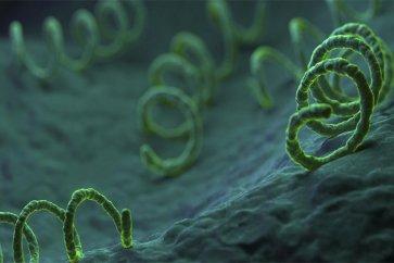 با عفونت باکتریایی سیفلیس یکی از بیماریهای منتقله از راه جنسی آشنا شوید