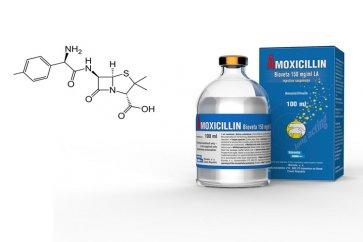 داروی آموکسیسیلین چیست و چه اثرات و عوارضی دارد؟