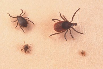 معرفی بیماریهایی که از طریق حشرات و کنهها به انسان منتقل میشوند